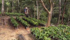 Programa manejo integrado de recursos naturales con pueblos indígenas en Centroamérica