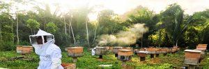 Programa de Agrobiodiversidad Campesina e Indígena de Centroamérica