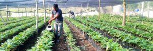 Agrobiodiversificación Alimentaria.    Productores y Productoras Integrales de Peña Hueca (ACEPI)