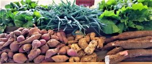 Apicultura y Sistemas agrodiversos. Cooperativa de Productores de Frutas Tradicionales Bromelias