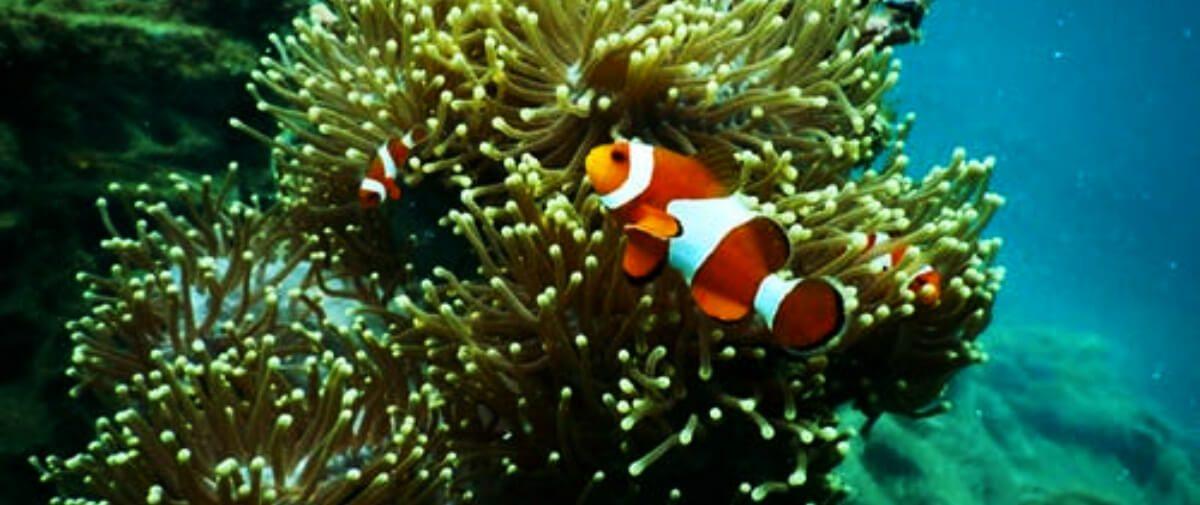 Los océanos son el pilar de la vida, las prácticas insostenibles le están causando un grave daño.