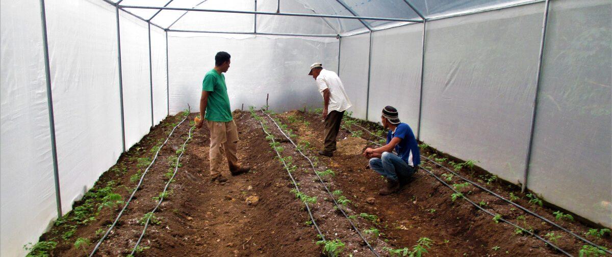 Agro diversificación productiva, alimentaria y cosmética, Peña Hueca, Morazán, El Salvador.