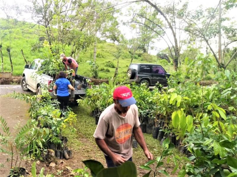Entrega de árboles frutales