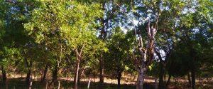 Asociación de productores Orgánicos Los Botados (APROGLOBO)