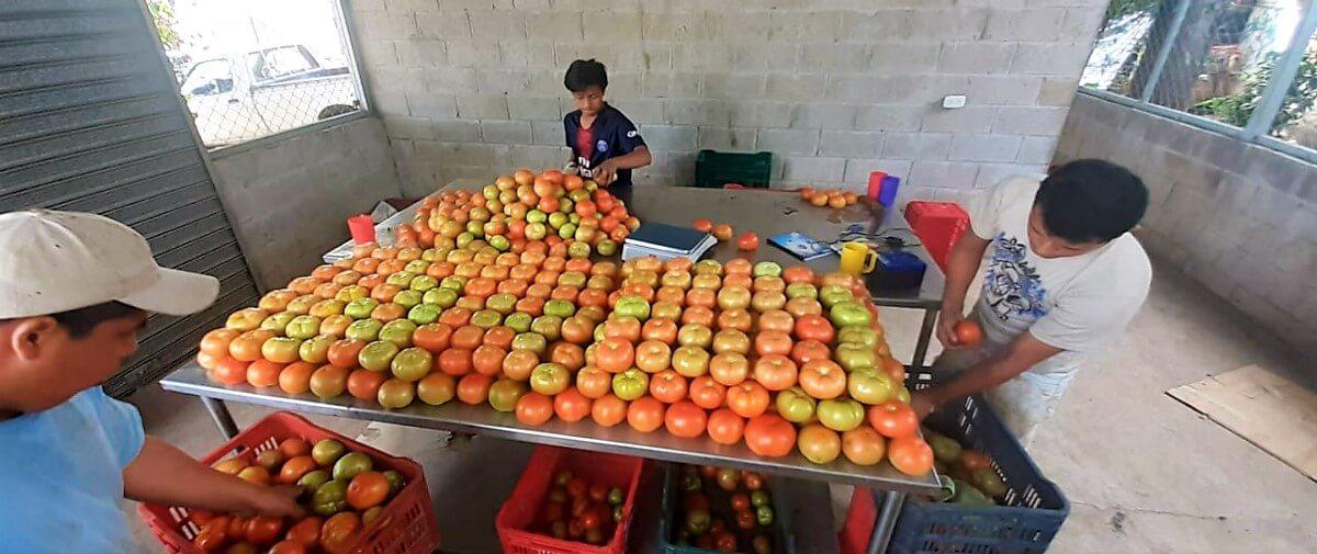 Inversiones Previas a la Llegada Del Covid-19 Permiten Afrontar de Mejor Forma la Crisis Alimentaria en El Salvador
