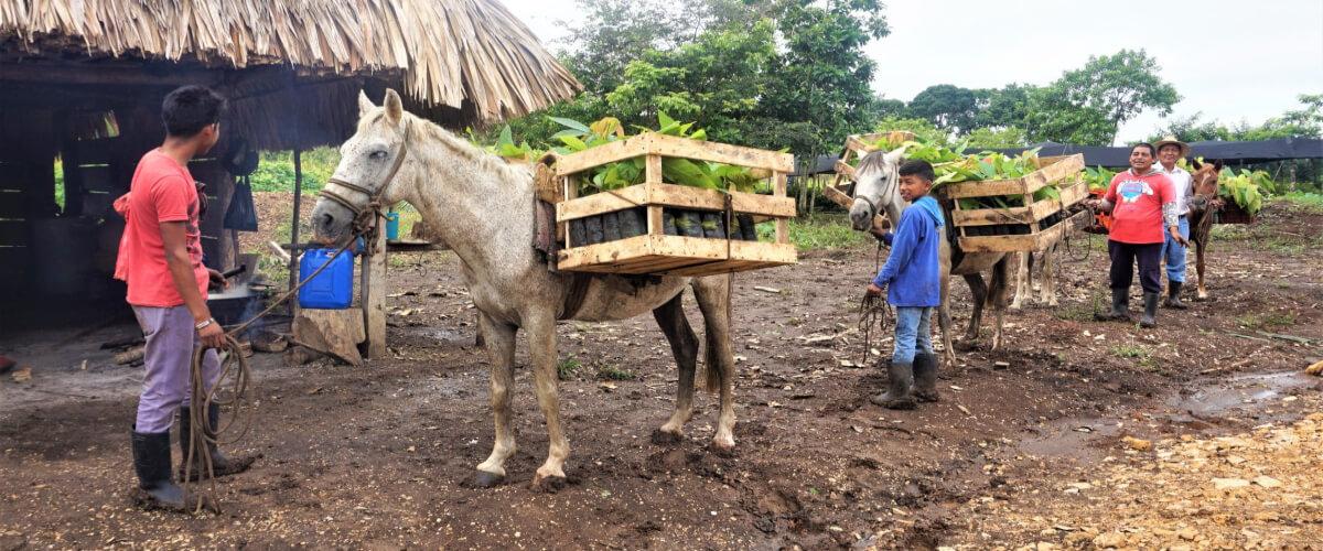 Diversificación Productiva con Enfoque Agroecológico en Sayaxché, Petén, Guatemala