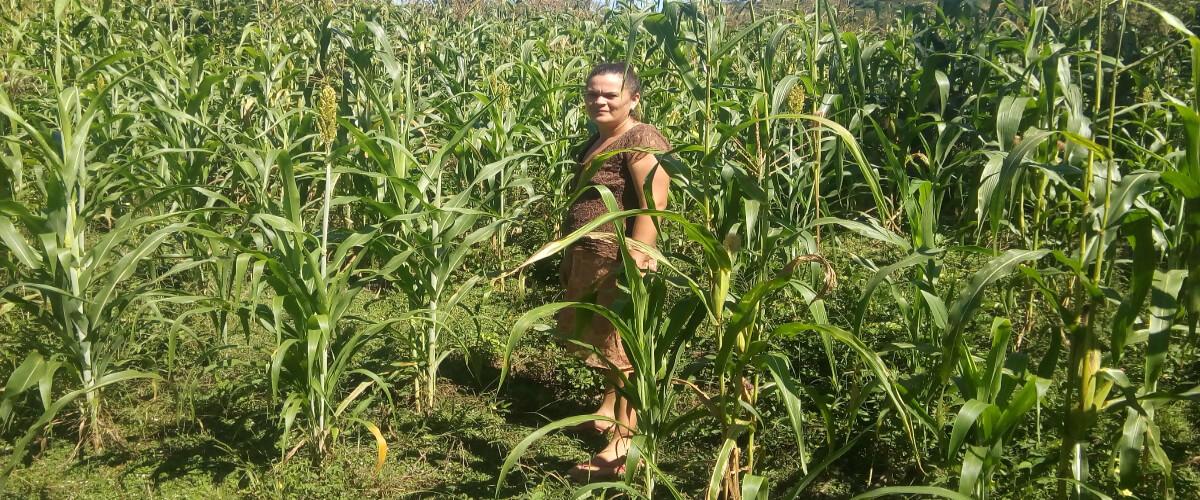 Seguridad alimentaria, mediante el establecimiento de bancos de semillas criollas como medida de adaptación al cambio climático