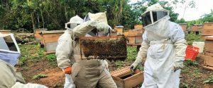 Productores de miel de abeja en Chalatenango, El Salvador cuentan con una gran ventaja para hacer frente a la crisis generada por el COVID-19