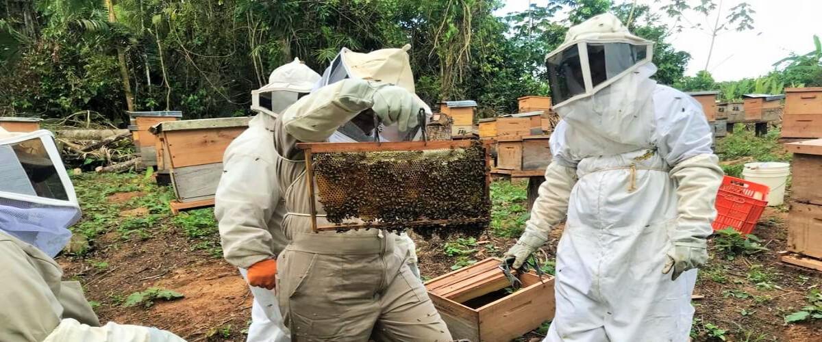Conservando la agrobiodiversidad mediante la ampliación de sistemas agroforestales y la producción de miel de abeja