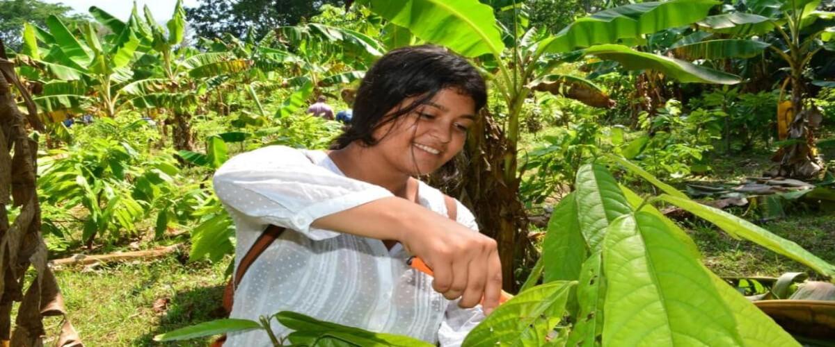Diversificación De Parcelas Y Fortalecimiento Técnico Del Saber Agrícola En Los Pueblos Indígenas