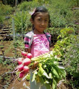 La niña Jennifer Elizabeth Salazar Mendoza,de la cumbre el Olvido, mostrándonos Rábanos Orgánicos