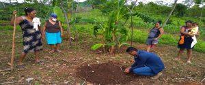 Comunidades Indígenas en el Municipio de Tacuba, realizan acciones encaminadas a fortalecer la autonomía alimentaria en tiempos de COVID-19
