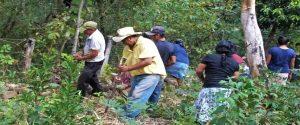 Frijol en Olancho, Producción en Casa   (APROSACAO)
