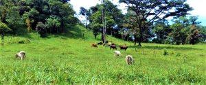 Asociación de Productores de Sistemas Agroforestales con Cacao Orgánico-Olancho