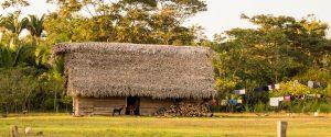 Agricultura Ecológica (FIAN Honduras / AHCC)