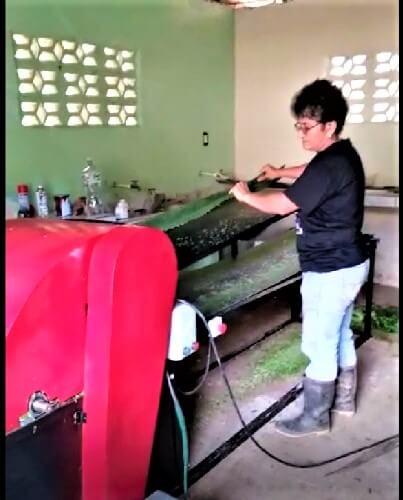 Extracción de fibra de cabuya, con la máquina desfibradora