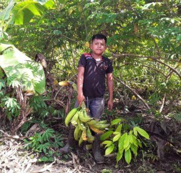 Joven agricultor con racimo de plátano