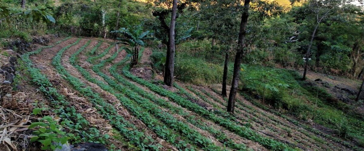 Seguridad alimentaria como medida de adaptación al cambio climático
