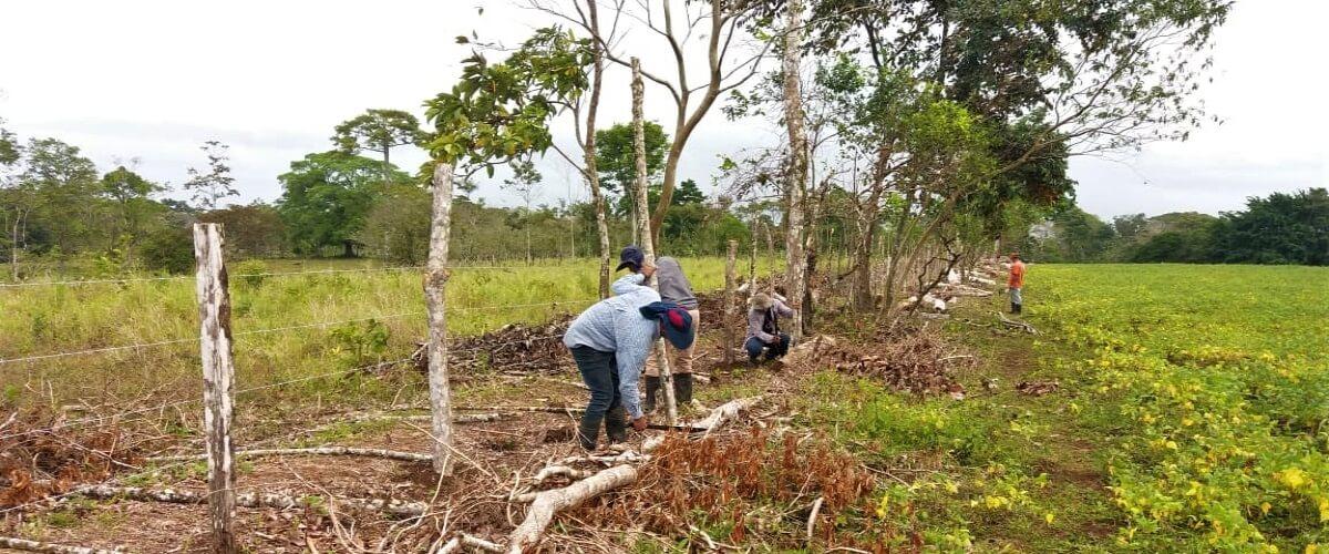 A través de prácticas agroecológicas y alianzas estratégicas se impulsa la economía familiar en Guatuso, Costa Rica