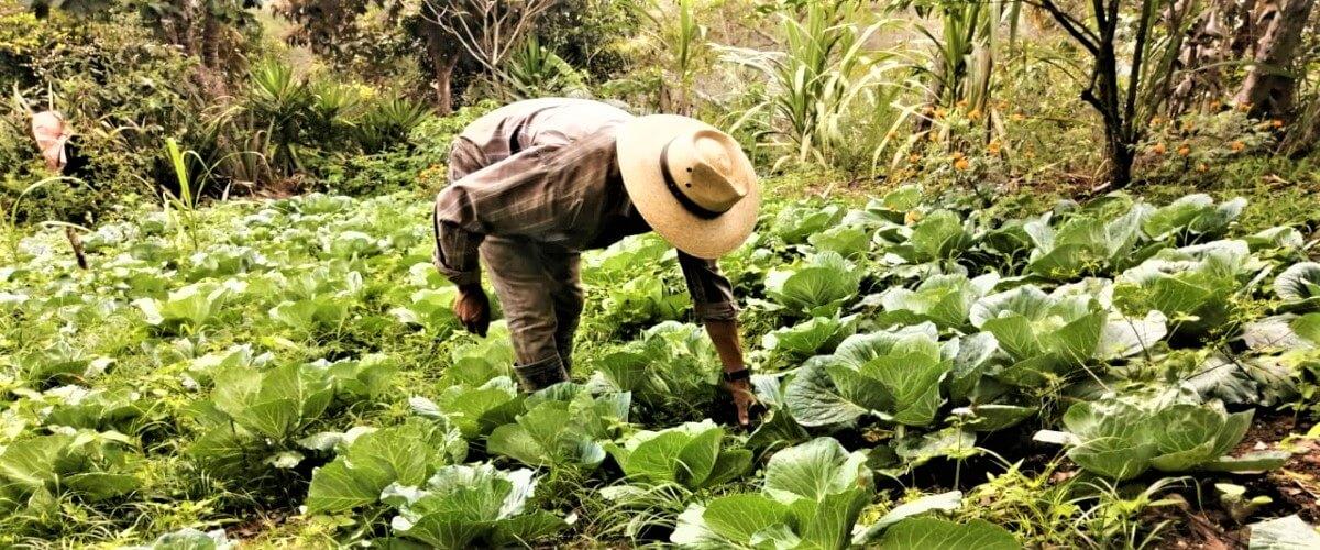 Agricultura ecológica, una alternativa de adaptación para familias indígenas y campesinas en Copán Ruinas