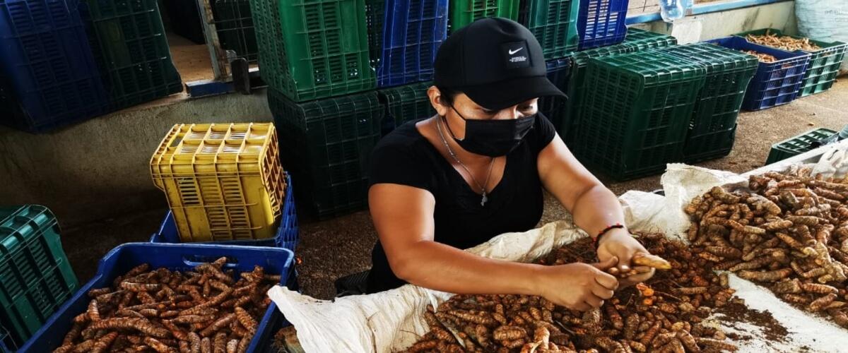 La cooperativa COOPEASSA R.L, se abre camino en el mercado nacional e internacional con productos orgánicos certificados