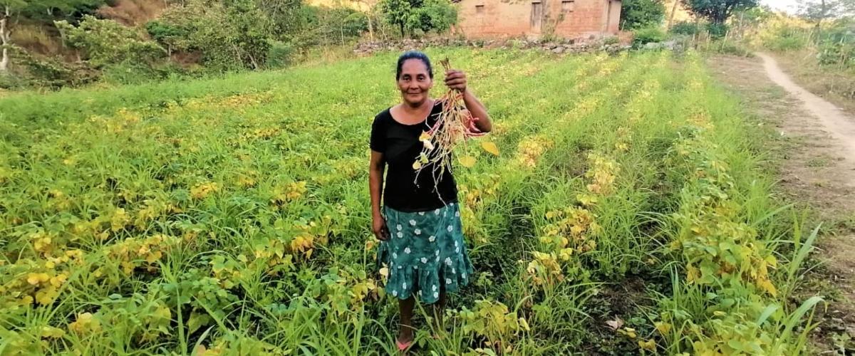 Bancos de semillas, sistemas de riego y capacitación; claves para lograr la seguridad alimentaria en Choluteca, Honduras