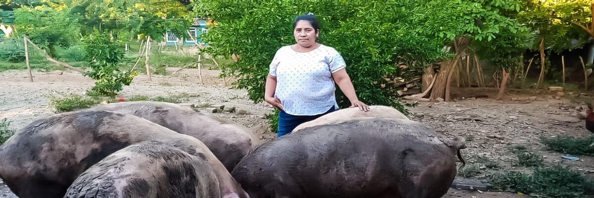 Mujeres de la Sureñita, mejoran la calidad de vida, mediante la producción de cerdos y gallinas ecológicas