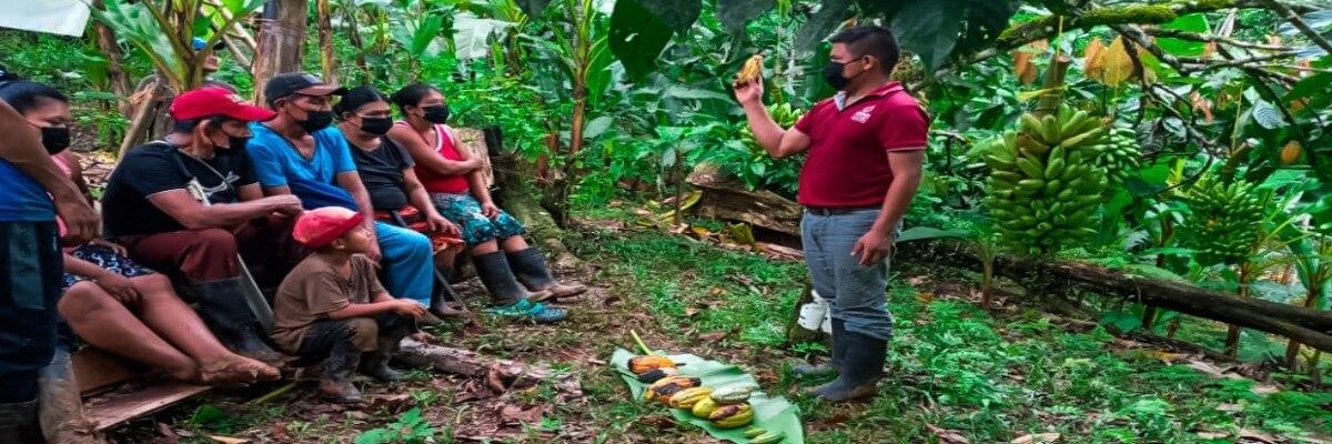 Restauración de plantaciones de cacao devuelve la esperanza a productores de COCABO, en Almirante, Bocas del Toro, Panamá