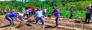 En Bocas del Toro Panamá, se firmó ley que incentiva la producción de Cacao