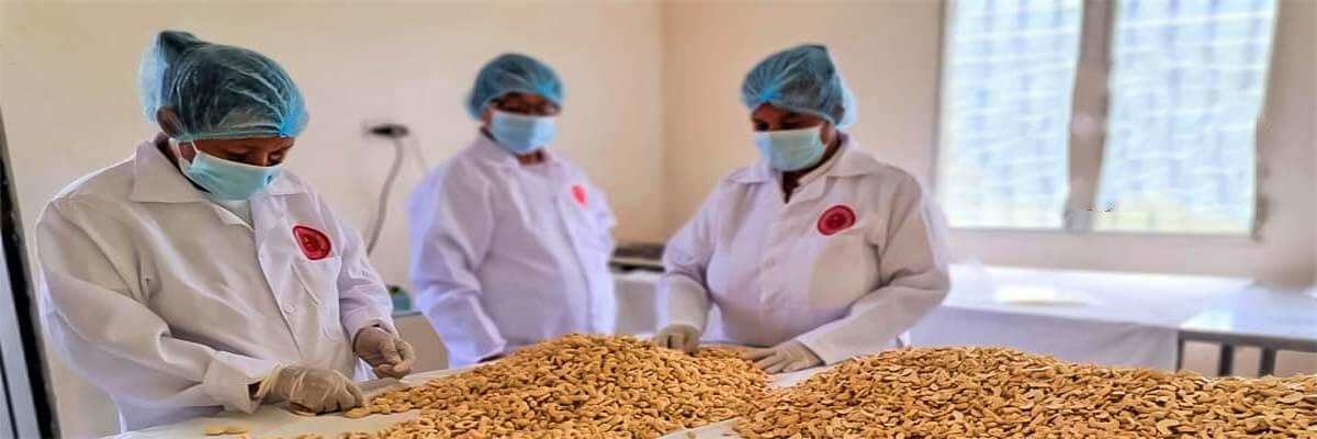 Cooperativa de mujeres la Sureñita, conquista el mercado con marañón procesado